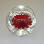 Gerber Daisy centerpiece fishbowl RR099_nn