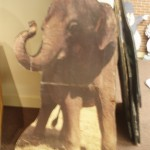 Elephant prop backdrop tott